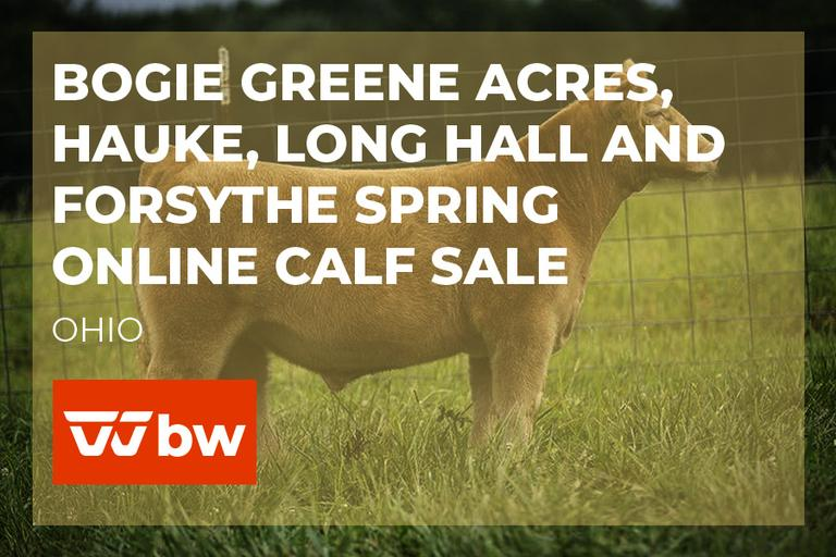 Bogie Greene Acres, Hauke, Long Hall and Forsythe Spring Online Calf Sale - Ohio