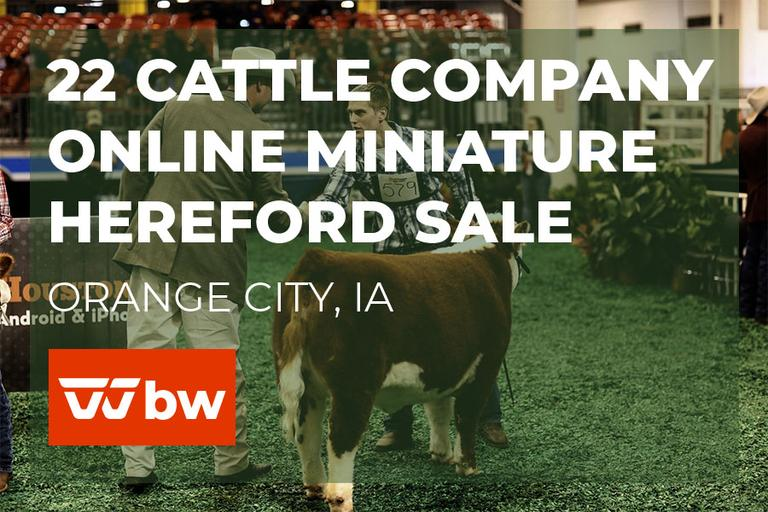 22 Cattle Company Online Miniature Hereford Sale - Iowa