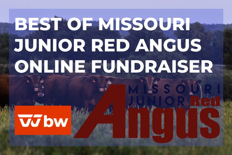 Best of Missouri Junior Red Angus Online Fundraiser - Missouri