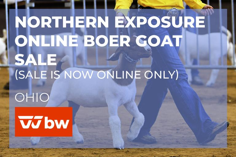 Northern Exposure Boer Goat Online Sale - Ohio