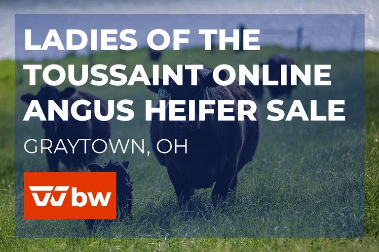 Ladies of the Toussaint Online Angus Heifer Sale - Ohio