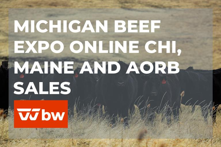 Michigan Beef Expo Online Chi, Maine and AORB Sales