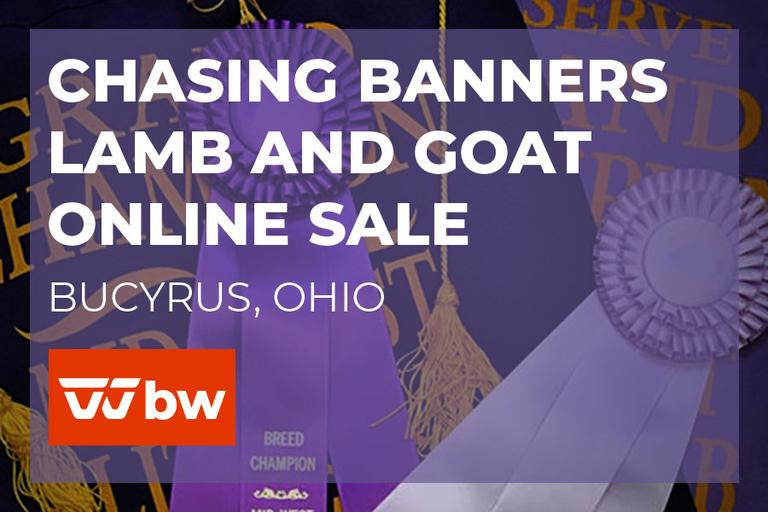 Chasing Banners Lamb and Goat Online Sale - Ohio