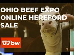 Ohio Beef Expo Online Hereford Sale