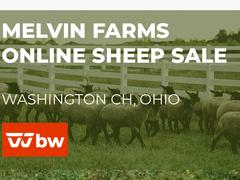 Melvin Farms Online Sheep Sale - Ohio