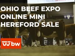 Ohio Beef Expo Online Mini Hereford Sale