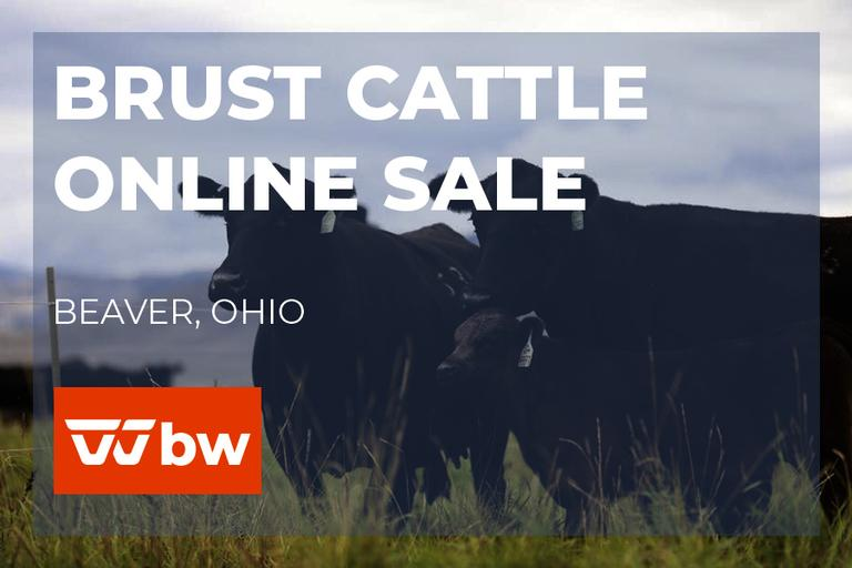 Brust Cattle Online Sale - Ohio