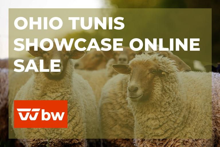 Ohio Tunis Showcase Online Sale - Ohio