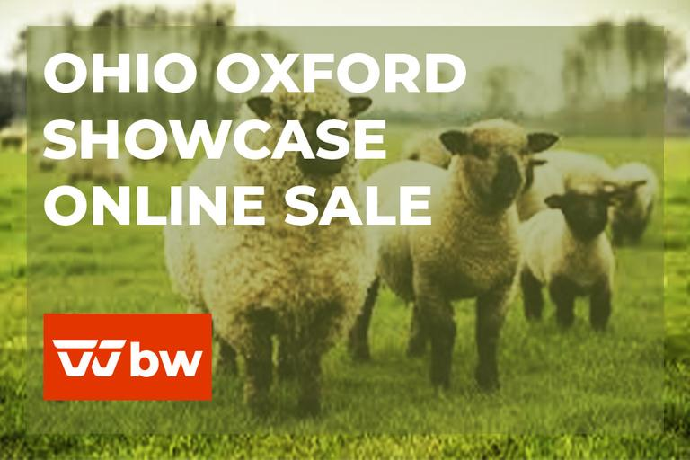 Ohio Oxford Showcase Online Sale - Ohio