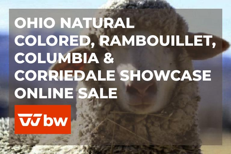 Ohio Natural Colored, Rambouillet, Columbia & Corriedale Showcase Online Sale - Ohio