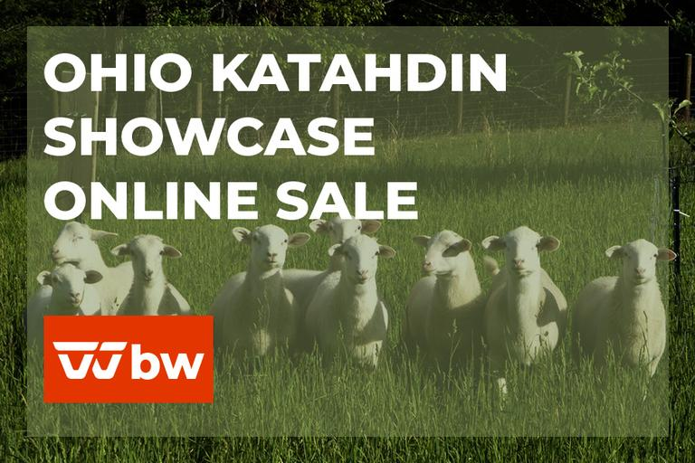 Ohio Katahdin Showcase Online Sale - Ohio