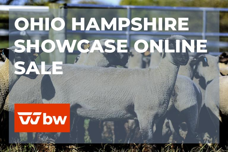 Ohio Hampshire Showcase Online Sale - Ohio