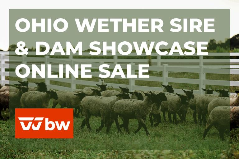 Ohio Wether Sire & Dam Showcase Online Sale - Ohio