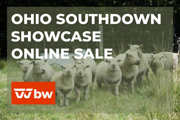 Ohio Southdown Showcase Online Sale - Ohio