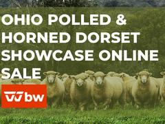 Ohio Polled & Horned Dorset Showcase Online Sale - Ohio