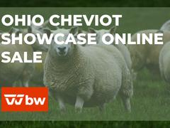 Ohio Cheviot Showcase Online Sale - Ohio