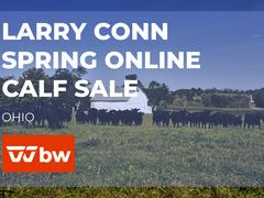 Larry Conn Spring Online Calf Sale - Ohio