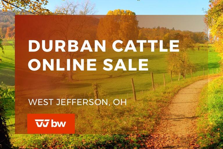 Durban Cattle Company Online Sale - Ohio