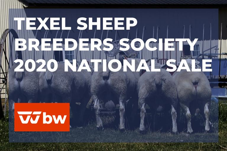 Texel Sheep Breeders Society 2020 National Online Sale