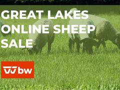 Great Lakes Online Sheep Sale