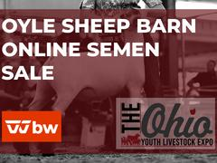 OYLE Sheep Barn Online Semen Sale - Ohio