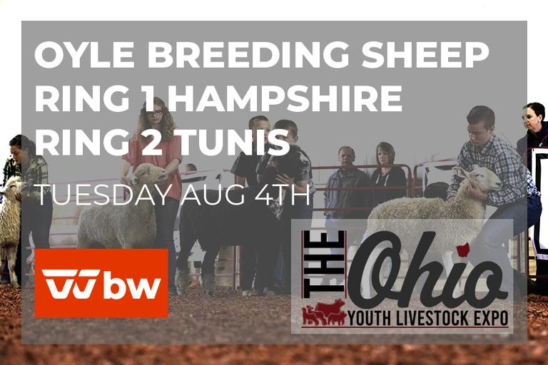 OYLE Breeding Sheep Show Broadcast August 4th Ring 1 - Hampshire