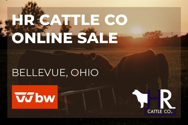 HR Cattle Co Online Sale - Ohio