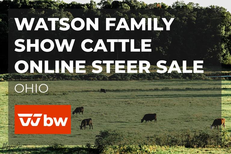 Watson Family Show Cattle Online Steer Sale - Ohio