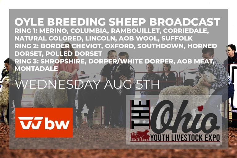 OYLE Breeding Sheep Show Broadcast August 5th Ring 3