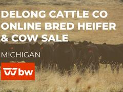 DeLong Cattle Co Online Bred Heifer & Cow Sale - Michigan