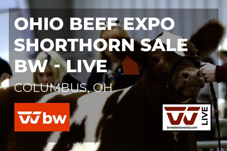 Ohio Beef Expo Shorthorn Sale - BW Live