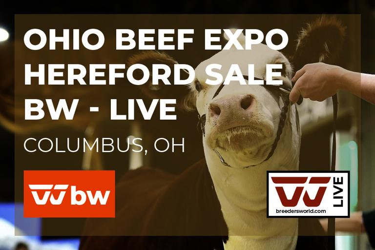 Ohio Beef Expo Hereford Sale - BW Live