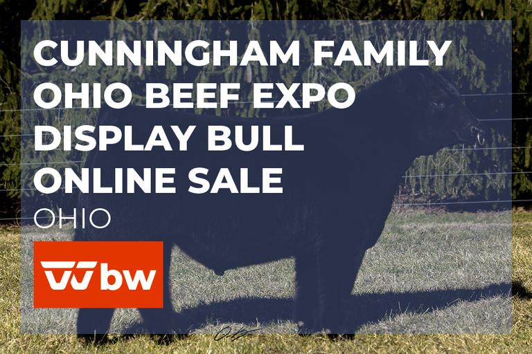 Cunningham Family Farms Ohio Beef Expo Display Bull Online Sale - Ohio