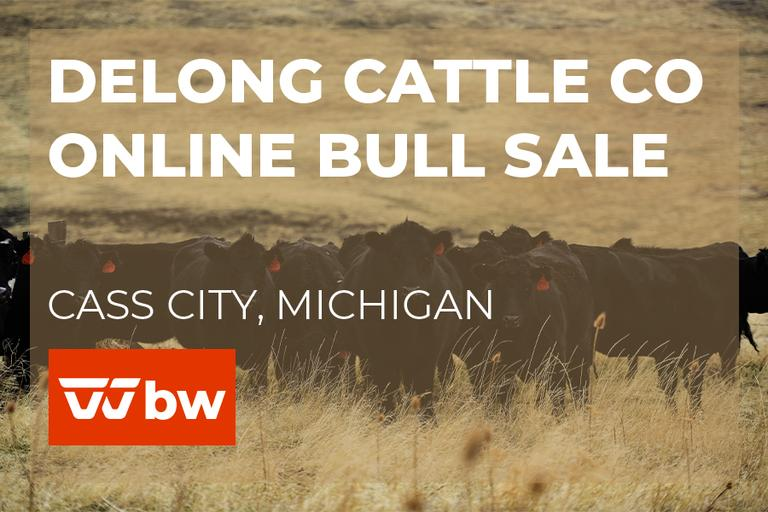 DeLong Cattle Co Online Bull Sale - Michigan