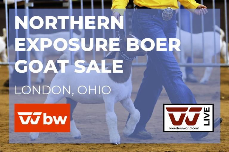Northern Exposure Boer Goat Sale - Live