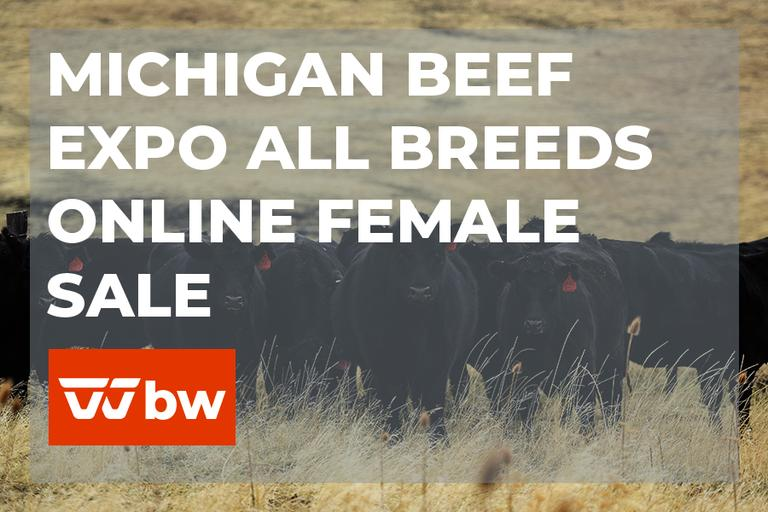 Michigan Beef Expo All Breeds Online Female Sale