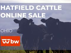 Hatfield Cattle Online Sale - Ohio