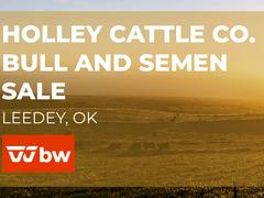 Holley Cattle Co Bull and Semen Online Sale - Oklahoma